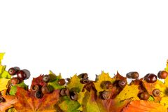 Листья осени установили, изолированный на белой предпосылке с пустым космосом для текста Стоковые Фото