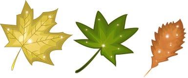Листья осени установили, изолированный на белой предпосылке Стоковая Фотография