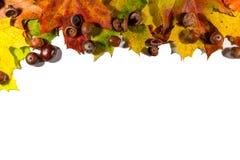 Листья осени установленные, на белую предпосылку с пустым космосом для текста Стоковое Изображение