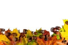 Листья осени установленные, на белую предпосылку с пустым космосом для текста Стоковая Фотография