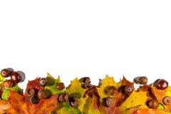 Листья осени установленные, на белую предпосылку с пустым космосом для текста Стоковые Изображения