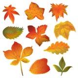 Листья осени установленные на белую предпосылку Стоковое Изображение RF