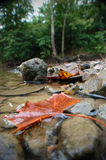 Листья осени & утесы реки Стоковое Изображение