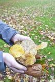 Листья осени удерживания Стоковое фото RF