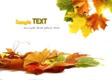листья осени цветастые Стоковые Изображения