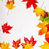 листья осени цветастые abstract background fall Понижаясь Marple Стоковые Фотографии RF