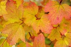 листья осени яркие Стоковое фото RF