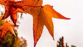 Листья 7 осени Стоковое Изображение RF
