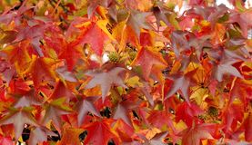 листья осени Стоковое Изображение RF