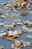листья осени Стоковая Фотография RF