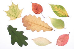 листья осени Стоковые Фотографии RF