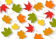 листья осени иллюстрация вектора