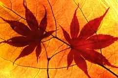 листья осени Стоковое Фото