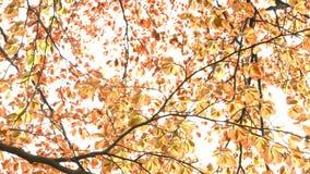Листья осени сток-видео