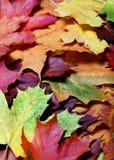 листья осени Стоковое фото RF