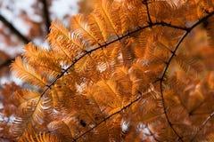 Листья осени 23 Стоковые Фотографии RF