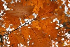 Листья осени Brown стоковое изображение