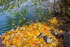 Листья осени Colrful плавая около берега стоковые изображения