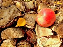 Листья осени creeper Вирджинии Стоковые Фотографии RF