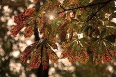 Листья осени kashtan на предпосылке неба с сияющим солнцем отмело стоковое изображение
