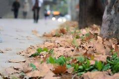 Листья осенью Стоковое Изображение