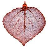 листья осины медные Стоковая Фотография RF
