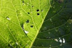 листья отверстий Стоковые Фото