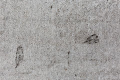 Листья отпечатанные на мостоваой цемента Стоковое Фото