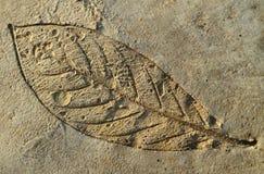 листья отпечатка пола цемента Стоковые Фото