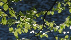 Листья отражены в воде видеоматериал