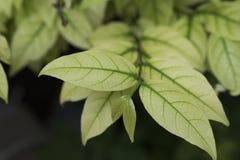 листья от дерева стоковое фото rf