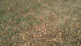 листья падают стоковое фото