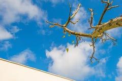 Листья падая от подрезанного фруктового дерев дерева в солнечном свете Стоковые Изображения RF