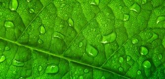листья падений росы Стоковое фото RF
