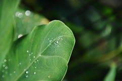 листья падений росы стоковое изображение rf