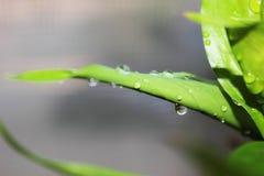листья падений росы Стоковые Фото
