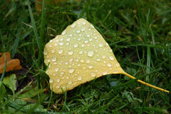 листья падений Стоковое фото RF