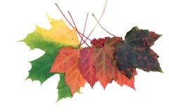 листья падений Стоковые Фотографии RF