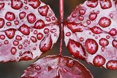 листья падений Стоковые Фото