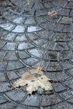 листья падений Стоковое Изображение