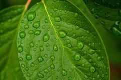 листья падений стоковое изображение rf