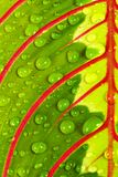 листья падений стоковое фото