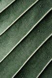 листья падений Стоковая Фотография RF