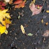 Листья падения, асфальт Стоковое Фото