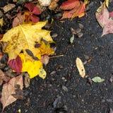 Листья падения, асфальт Стоковые Изображения RF