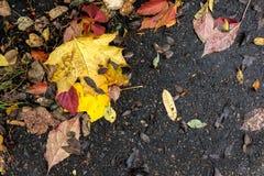 Листья падения, асфальт Стоковые Изображения