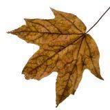 листья падения влажные Стоковое Изображение RF
