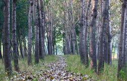 листья падения выровняли вал путя Стоковое Изображение RF