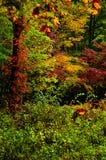 Листья падения в больших закоптелых горах Стоковые Изображения RF
