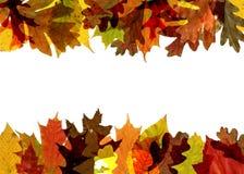 листья падения граници Стоковое Изображение RF